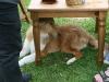 2010-05-23 Treffen BI - 15