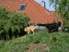 2010-05-25 Besuch Evern - 34