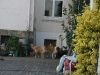 2010-05-25 Besuch Evern - 51