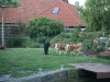 2010-06-05 Grillen Evern - 13