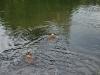 2010-06-06 Schwimmen - 101