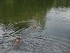 2010-06-06 Schwimmen - 102