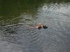 2010-06-06 Schwimmen - 107