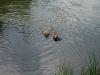 2010-06-06 Schwimmen - 110