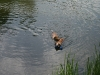 2010-06-06 Schwimmen - 113
