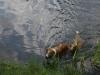 2010-06-06 Schwimmen - 118