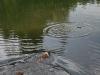 2010-06-06 Schwimmen - 122