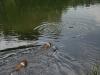 2010-06-06 Schwimmen - 123