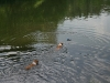 2010-06-06 Schwimmen - 126
