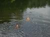 2010-06-06 Schwimmen - 128