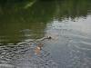 2010-06-06 Schwimmen - 129