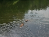 2010-06-06 Schwimmen - 130