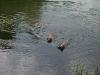 2010-06-06 Schwimmen - 137