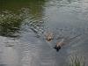 2010-06-06 Schwimmen - 138