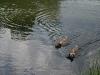 2010-06-06 Schwimmen - 139