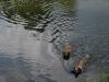 2010-06-06 Schwimmen - 141