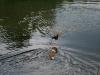 2010-06-06 Schwimmen - 153