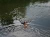 2010-06-06 Schwimmen - 154