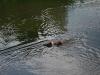 2010-06-06 Schwimmen - 155
