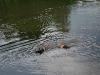 2010-06-06 Schwimmen - 156