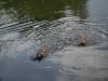 2010-06-06 Schwimmen - 158