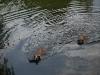 2010-06-06 Schwimmen - 159