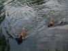 2010-06-06 Schwimmen - 160