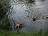 2010-06-06 Schwimmen - 161