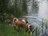 2010-06-06 Schwimmen - 29