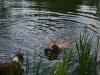 2010-06-06 Schwimmen - 54