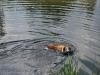 2010-06-06 Schwimmen - 84