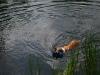 2010-06-06 Schwimmen - 88