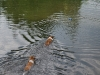 2010-06-06 Schwimmen