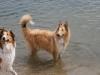 2010-07-04  Schwimmen - 16