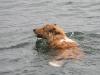 2010-07-04  Schwimmen - 17