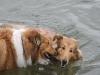 2010-07-04  Schwimmen - 18