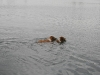 2010-07-04  Schwimmen - 31