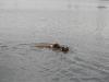 2010-07-04  Schwimmen - 32