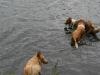 2010-07-04  Schwimmen - 47