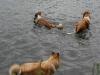 2010-07-04  Schwimmen - 48