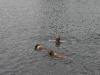 2010-2010-07-04  Schwimmen - 52