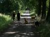2010-07-18 Pensionsgäste - 71