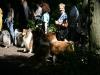 2010-07-25 Colliespaziergang Bult - 22