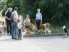 2010-07-25 Colliespaziergang Bult - 4