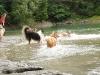 2010-08-14 Fox-Lions treffen - 67