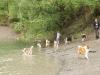 2010-08-14 Fox-Lions treffen - 71