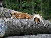 2010-08-14 Fox-Lions treffen - 98
