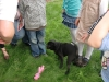 2010-09-03 Helferin auf vier Pfoten - 33