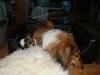 2010-11-23 Berta - 22