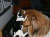 2010-11-23 Berta - 8